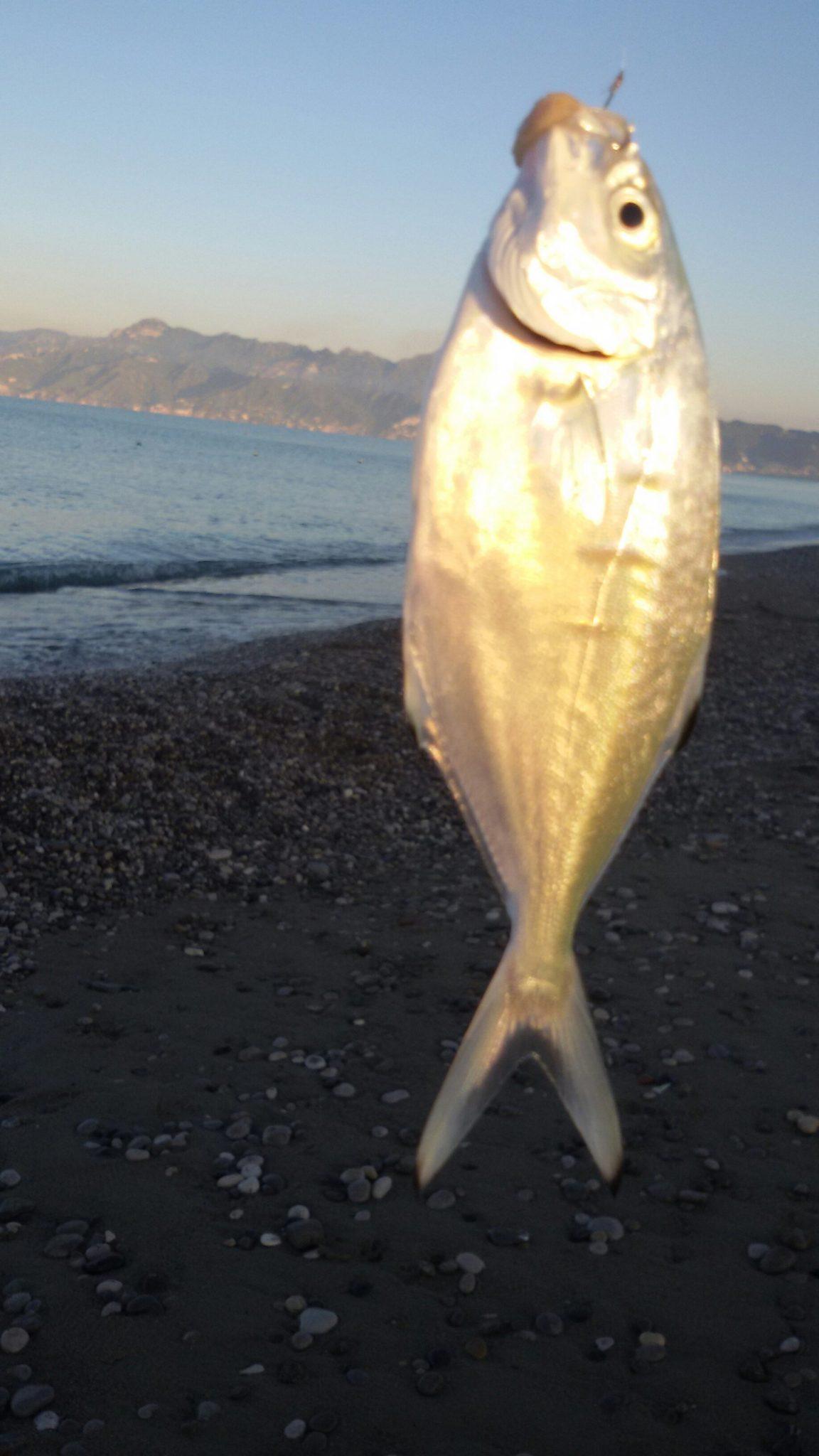 Una piccola Leccia stella pescata da riva
