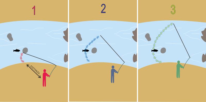 Ordine e traiettorie dei lanci nello spinning alla trota. Prima di avvicinarsi all'acqua, calare l'esca nel punto più vicino, poi eseguire lanci sempre più a distanza curando la traiettoria